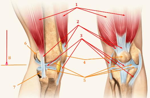Коленный сустав и ударная нагрузка